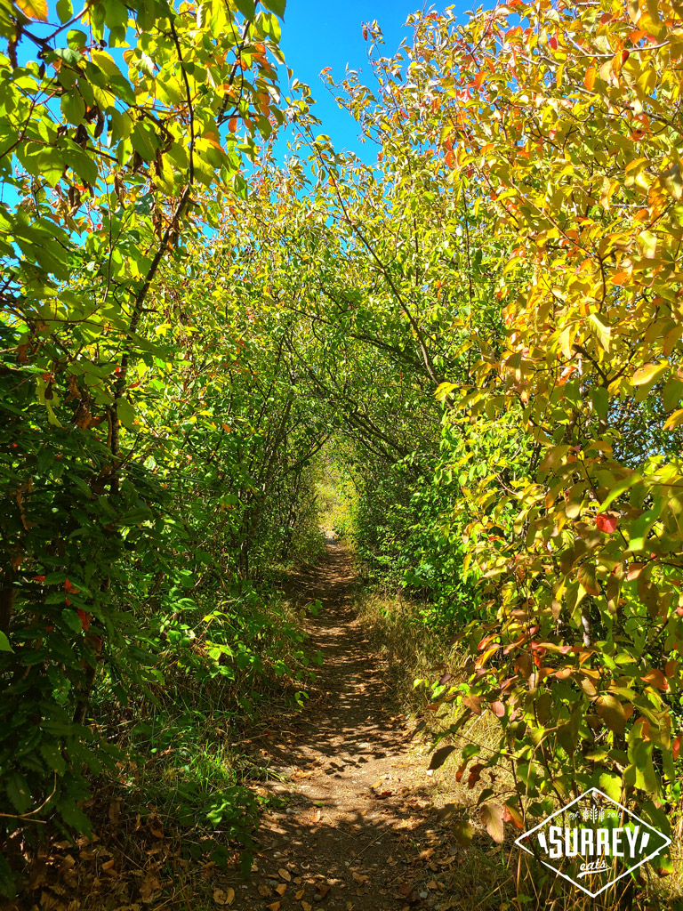 A trail through the bushes at Blackie Spit